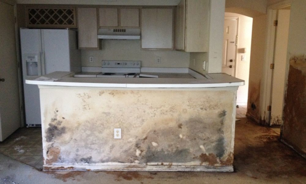 Mold Remediation Pinellas Park Florida Able Builders Inc